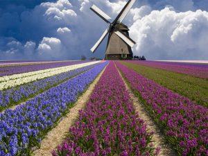 Những điểm đến mới mẻ và hấp dẫn ở Hà Lan